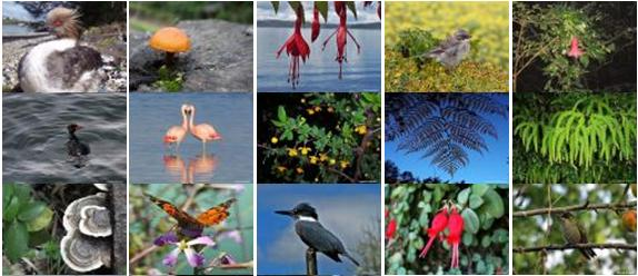 Turismo Región de Los Lagos  : Naturaleza que conmueve