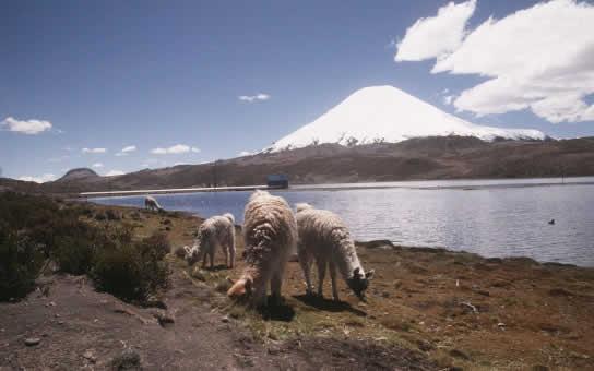 Lago_Chungara