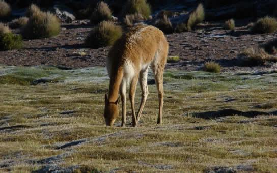 Ruta : Reserva Nacional Las Vicuñas