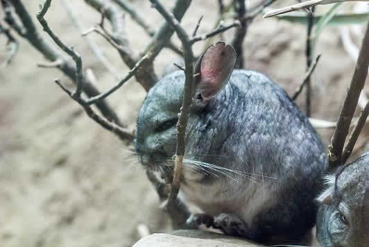 Reserva Nacional Las Chinchillas