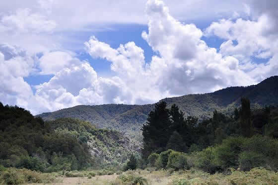 Reserva Nacional Los Huemules de Niblinto