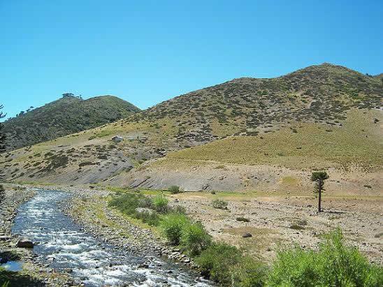 Conoce los atractivos turístico de la Reserva Nacional Alto Biobío