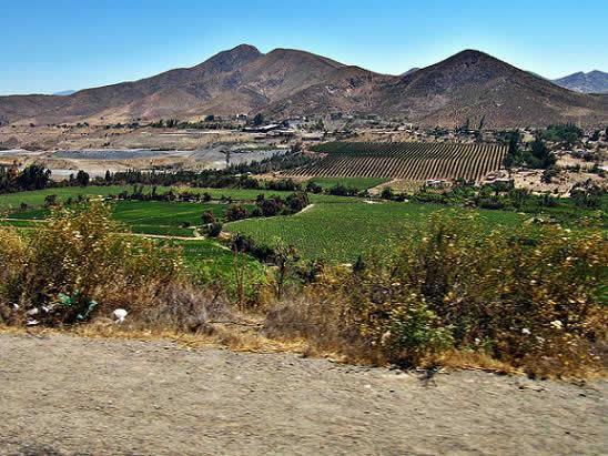 Ruta : Valle del Limarí
