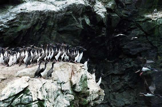 Ruta : Reserva Nacional Pingüino de Humboldt