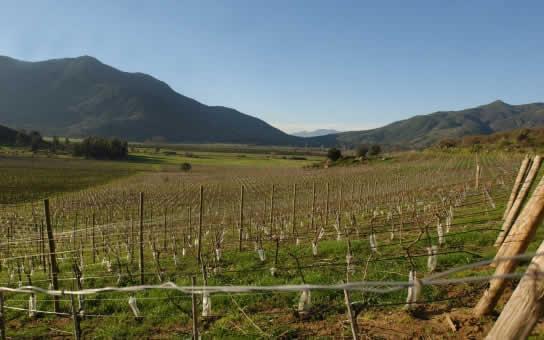 Visita a viñas y bodegas de vinos cerca de Santiago