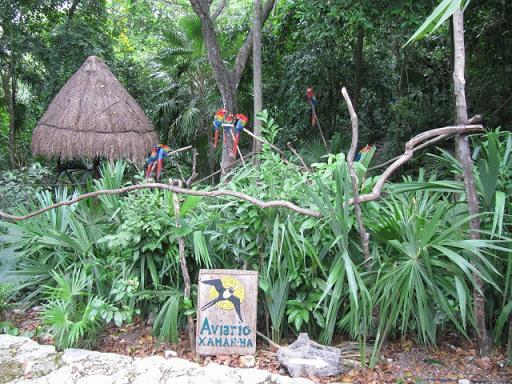 Descubre el gran atractivo turístico y cultural del Aviario Xaman-Ha en México