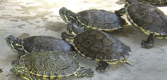Viaja y conoce la Granja de Tortugas en Isla Mujeres