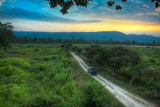 El impresionante Parque Natural de Kaziranga