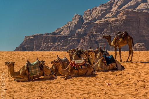 Viaja y conoce el desierto de Wadi Rum