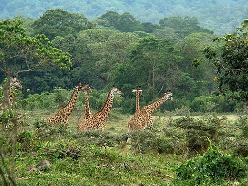 Parque Nacional de Arusha: ¡pequeño pero matón!