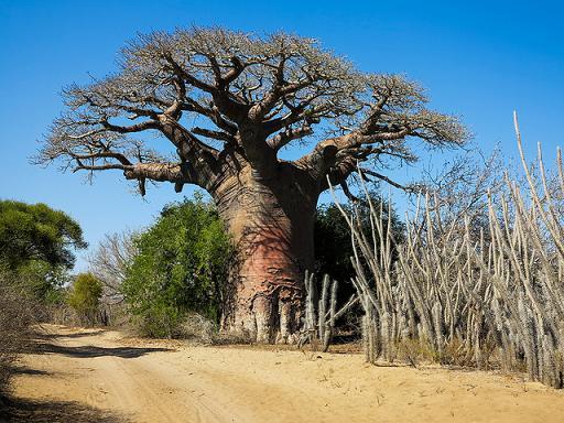 Secretos de África: Toliara