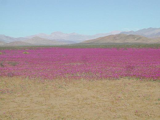Viaja y conoce Desierto Florido