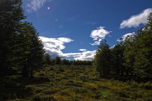 Rutas turísticas : Reserva Nacional Magallanes