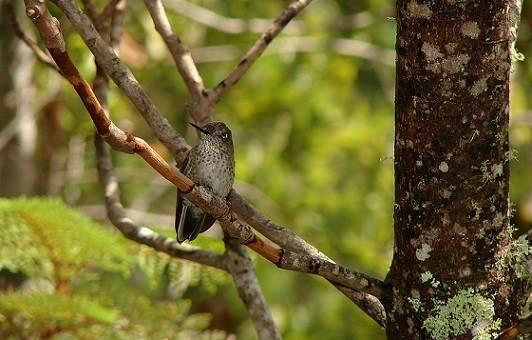 Descubre el Parque Katalapi en Puerto Montt