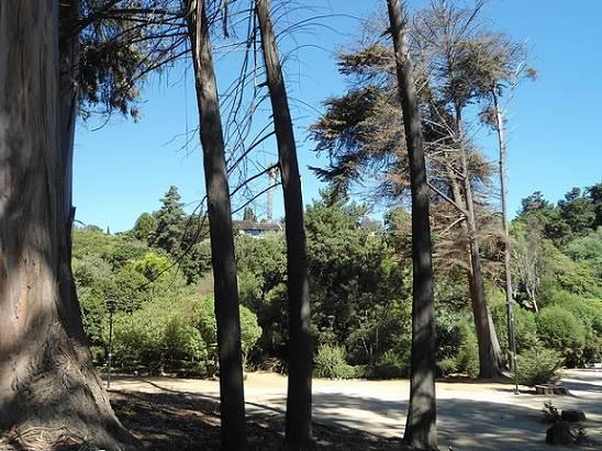 Parque el Boldo de Zapallar