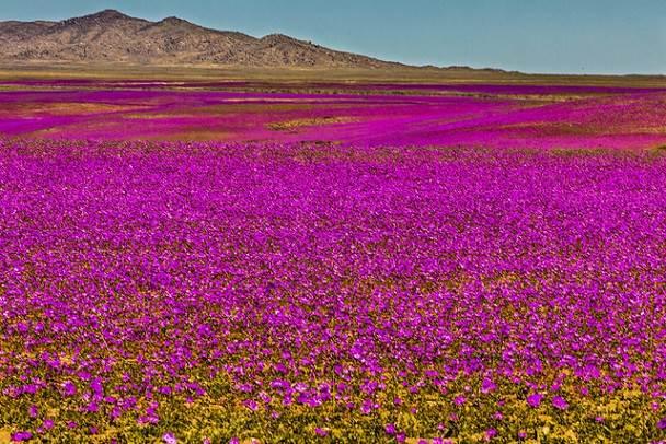 Lugares Increíbles de Chile que Tienes que Conocer