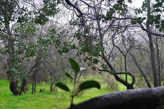7 imperdibles parques de Santiago de Chile