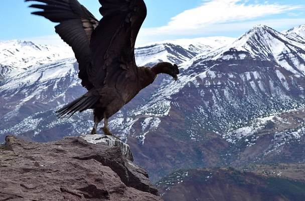 Avistamiento de Fauna en Chile