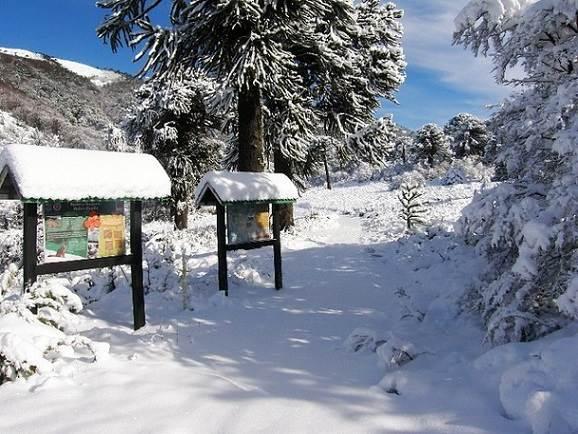 Plan Perfecto: Parques Naturales Cerca De Temuco